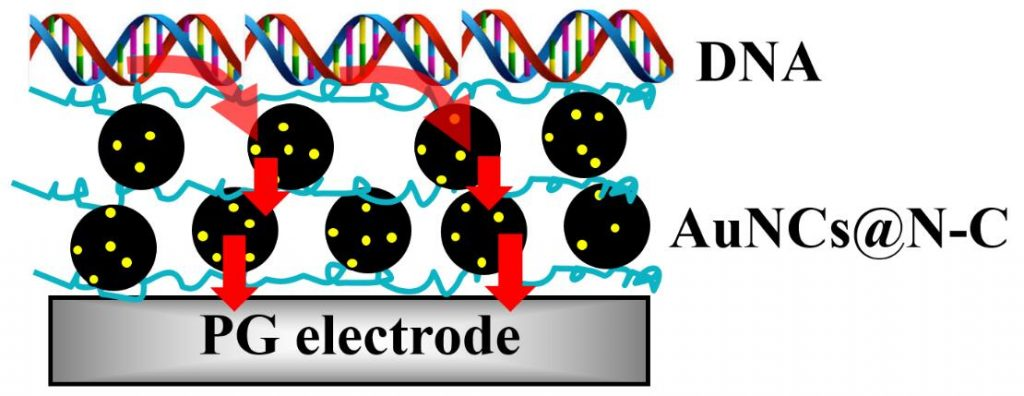 Electrocatalytic oxidation of alcohols, tripropylamine, and DNA by ligand-free gold nanoclusters on nitrided carbon