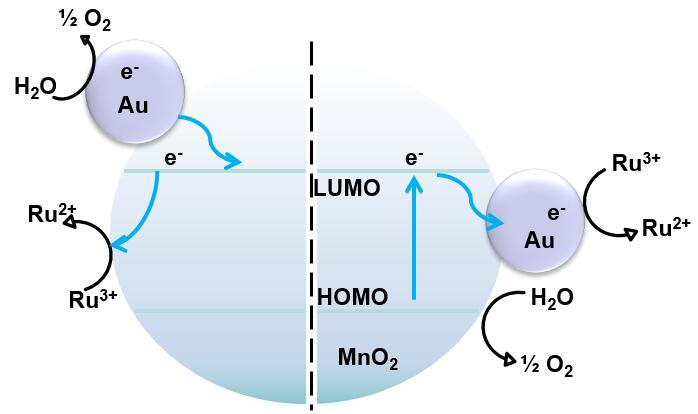 Understanding the role of gold nanoparticles in enhancing the catalytic activity of manganese oxides in water oxidation reactions