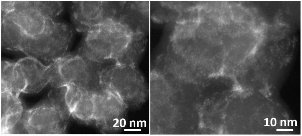 Ultrafine and ligand-free precious metal (Ru, Ag, Au, Rh and Pd) nanoclusters supported on phosphorus-doped carbon